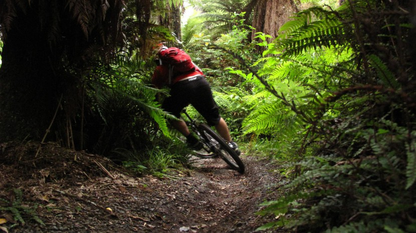 Into The Trees – W2k Track, Rotorua And Whirinaki…